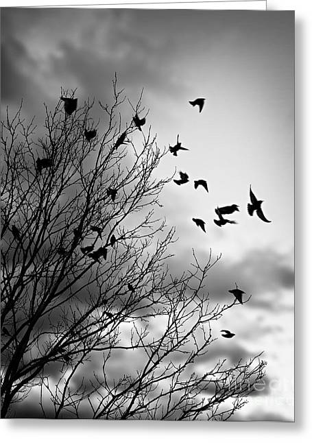 Sympathy Greeting Cards - Flying birds Greeting Card by Elena Elisseeva