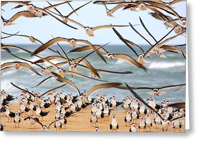 Flying Seagull Greeting Cards - Flying Birds Greeting Card by Valerie Tull