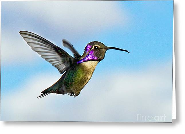 Haybales Greeting Cards - Flying Costas Greeting Card by Robert Bales