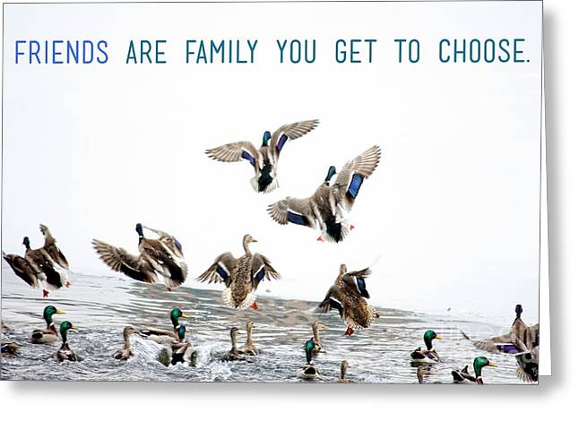 Inspirational Wildlife Prints Greeting Cards - Flying Ducks and a Friends Quote Greeting Card by Nishanth Gopinathan