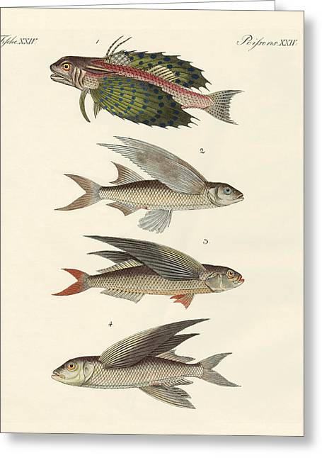 Flying Fish Greeting Cards - Flying fish Greeting Card by Splendid Art Prints