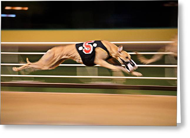 Dog Race Track Greeting Cards - Flying Five Greeting Card by Keith Armstrong