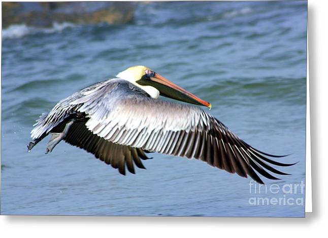 Sea Birds Greeting Cards - Flying Florida Pelican Greeting Card by Nick Gustafson