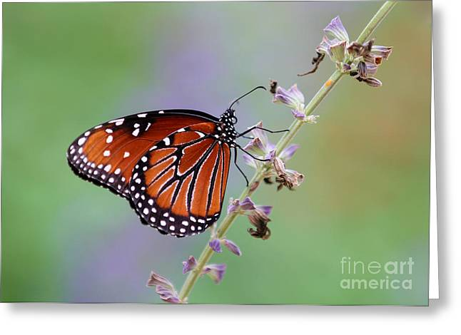 Baby Room Greeting Cards - Flying Flower Greeting Card by Sabrina L Ryan