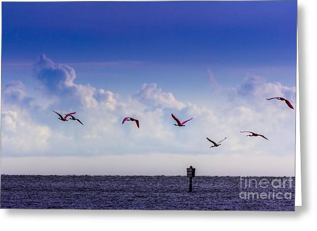 Sea Birds Greeting Cards - Flying Free Greeting Card by Marvin Spates
