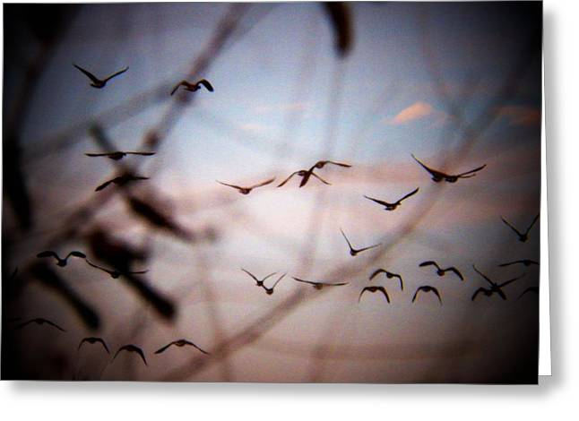 Flying Geese Greeting Cards - Flying Geese Greeting Card by Joyce Kimble Smith