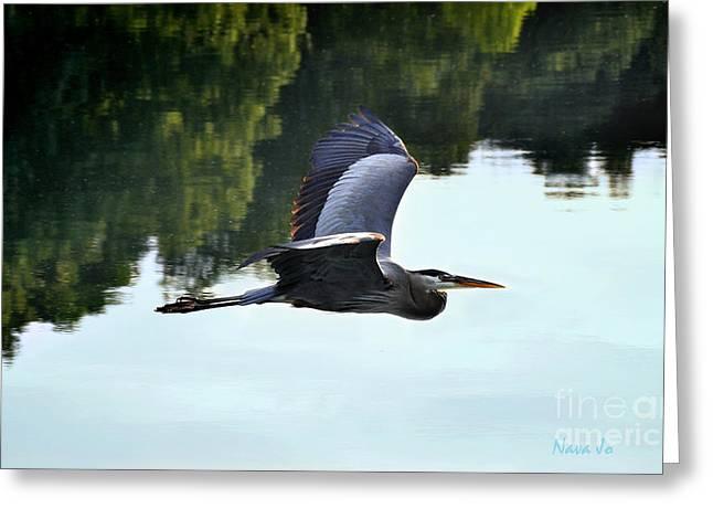 Nava Jo Thompson Greeting Cards - Flying Great Blue Heron Greeting Card by Nava  Thompson