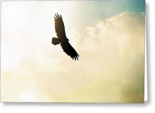 Soaring Falcon Greeting Cards - Flying High Greeting Card by Chastity Hoff