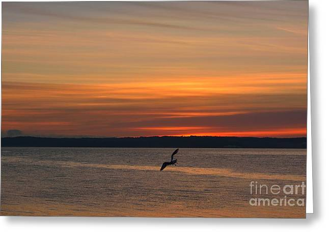 Shades Of Red Greeting Cards - Flying High Greeting Card by Elmar Langle