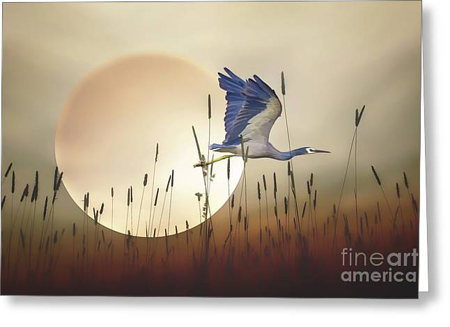 Outdoor Life Art Prints Greeting Cards - Flying Home Greeting Card by Tom York Images