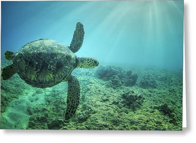 Sunburst Greeting Cards - Flying Honu Greeting Card by Hawaii  Fine Art Photography
