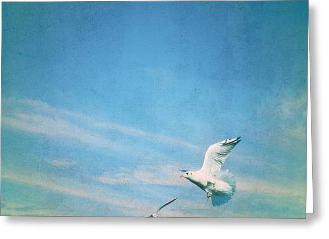 Sea Gulls Greeting Cards - Flying Into Blue Greeting Card by Steffi Louis