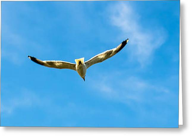 Seabirds Greeting Cards - Flying into the blue Greeting Card by Sotiris Filippou
