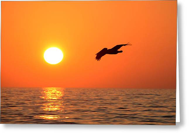 Flying Into The Sun Greeting Card by David Lee Thompson