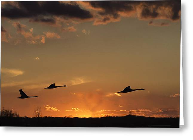 Trumpeter Silhouette Greeting Cards - Flying into the Sunset Greeting Card by Carolyn Fox