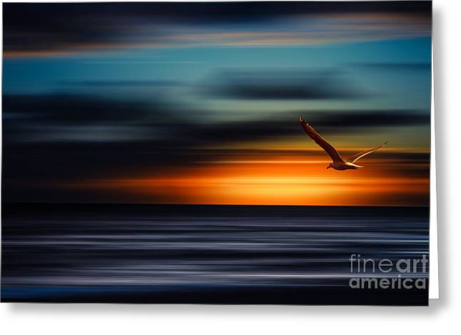 Seagul Greeting Cards - Flying Into The Sunset Greeting Card by Hannes Cmarits