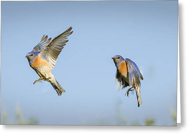 Flying Greeting Card by Jean Noren