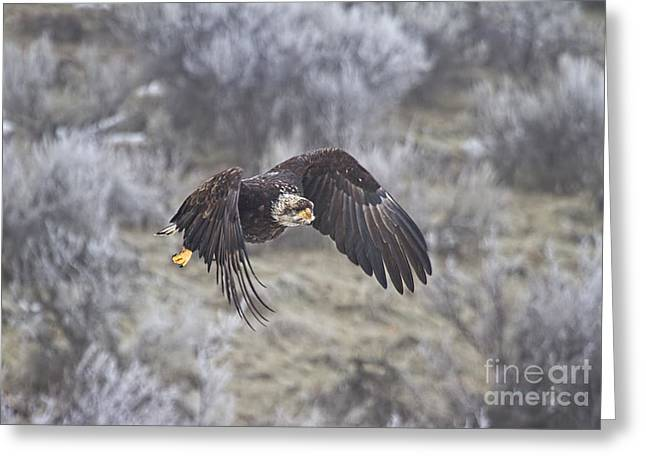 Juveniles Greeting Cards - Flying Low Greeting Card by Mike  Dawson