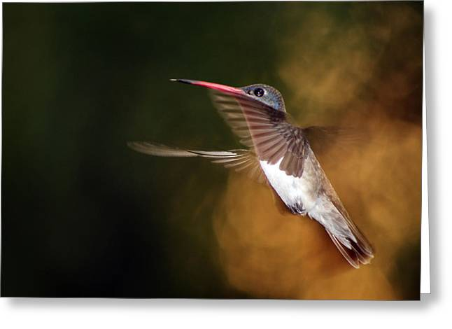 Selective Color Pyrography Greeting Cards - Flying Moments Greeting Card by Ignacio Ornelas Cravioto