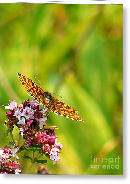 Orange And Brown Wings Greeting Cards - Flying off Greeting Card by Rossitsa Dimitrova