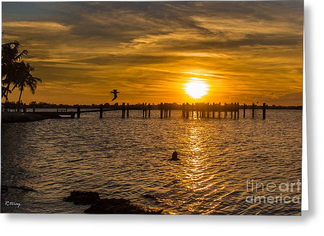 Isla Morada Greeting Cards - Flying Out  Greeting Card by Rene Triay Photography
