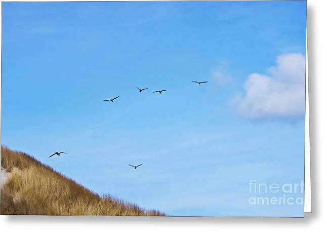 Flying Seagulls Greeting Cards - Flying over the dunes  Greeting Card by Angela Doelling AD DESIGN Photo and PhotoArt