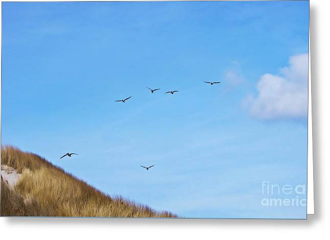 Flying Seagull Greeting Cards - Flying over the dunes  Greeting Card by Angela Doelling AD DESIGN Photo and PhotoArt