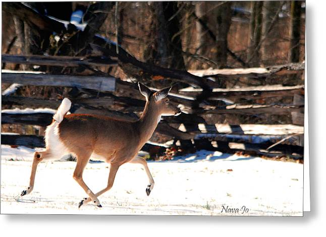 Pea Ridge Greeting Cards - Flying Over The Snow Greeting Card by Nava  Thompson