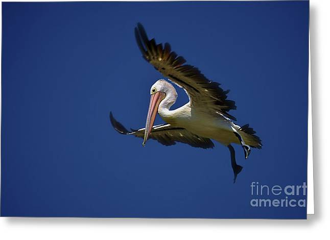 Flying Pelican 1 Greeting Card by Heng Tan