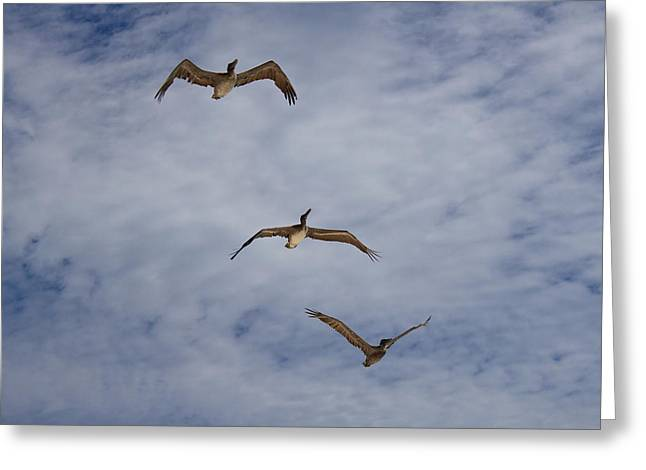 Mexico Greeting Cards - Flying Pelicans Greeting Card by Genaro Rojas