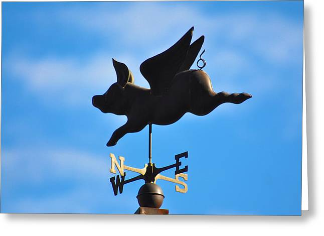 Flying Pig Greeting Cards - Flying Pig Greeting Card by Bill Cannon