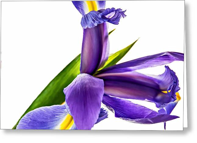 Flying Purple People Pleaser Greeting Card by Steve Harrington