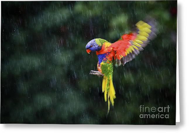 Flying Rainbow Lorikeet 1 Greeting Card by Heng Tan