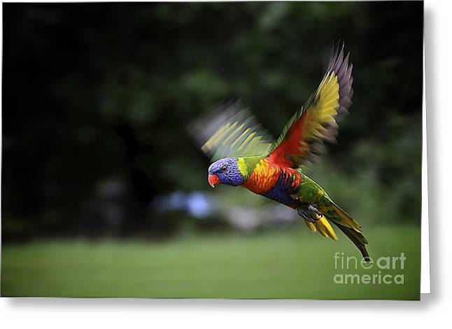 Flying Rainbow Lorikeet 5 Greeting Card by Heng Tan