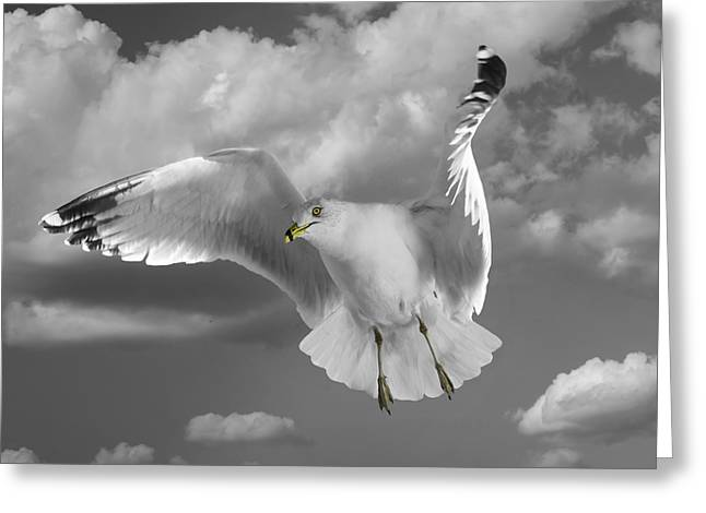 Flying Seagull Greeting Cards - Flying Solo Greeting Card by Steven  Michael