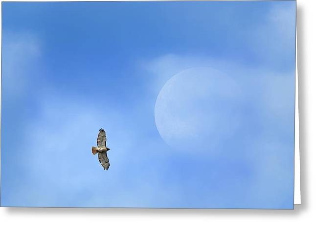 Red-tailed Hawk Greeting Cards - Flying To The Moon Greeting Card by Bill  Wakeley