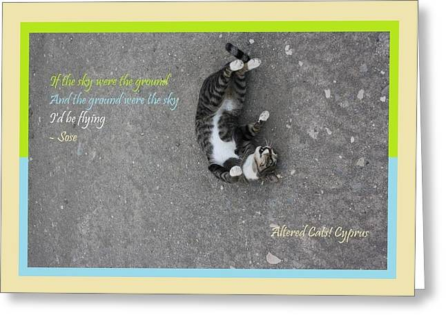 Rescue Mixed Media Greeting Cards - Flying With Sose From the Park Altered Cats Cyprus Greeting Card by Anita Dale Livaditis