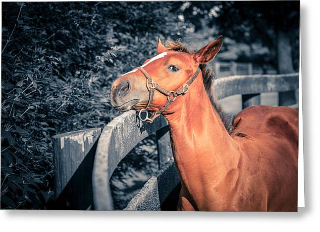 Bluegrass Greeting Cards - Foal by the fence Greeting Card by Alexey Stiop