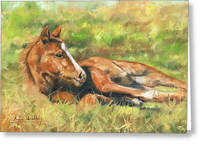 Foal Greeting Cards - Foal Greeting Card by David Stribbling