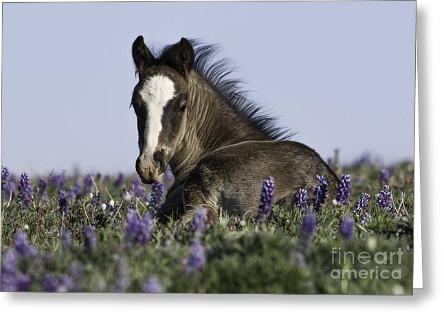Wild Horses Greeting Cards - Foal in the Flowers Greeting Card by Carol Walker