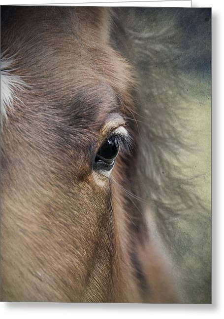 Haze Greeting Cards - Foal In The Mist Closeup Greeting Card by Ethiriel  Photography