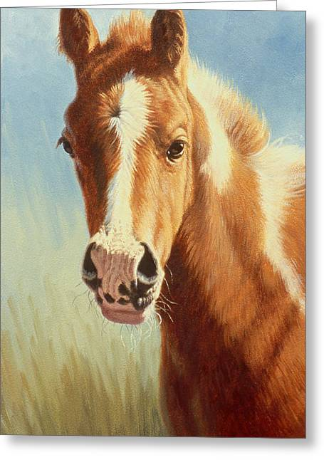 Foals Greeting Cards - Foal Portrait Greeting Card by Paul Krapf