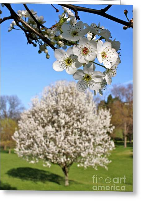 Jay Nodianos Greeting Cards - Focus On Spring Greeting Card by Jay Nodianos