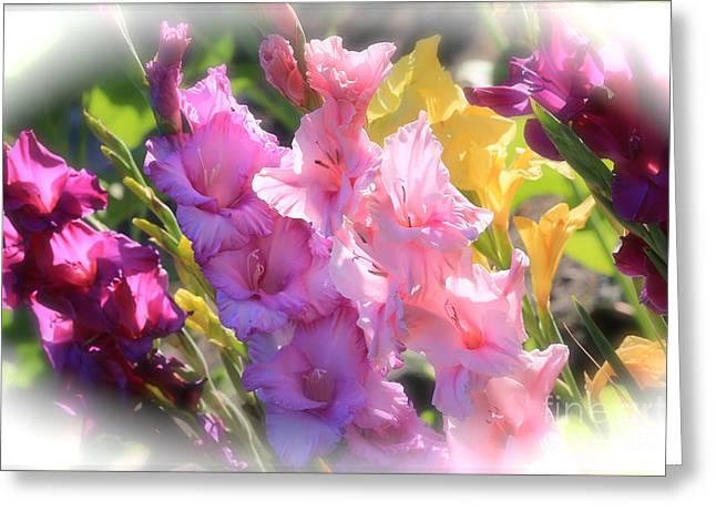 Gladiolas Greeting Cards - Focus on Summer Sunshine Greeting Card by Carol Groenen
