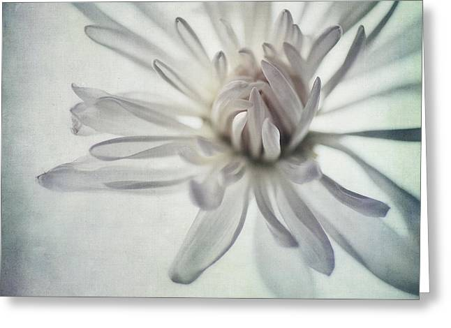 White Florals Greeting Cards - Focus On The Heart Greeting Card by Priska Wettstein