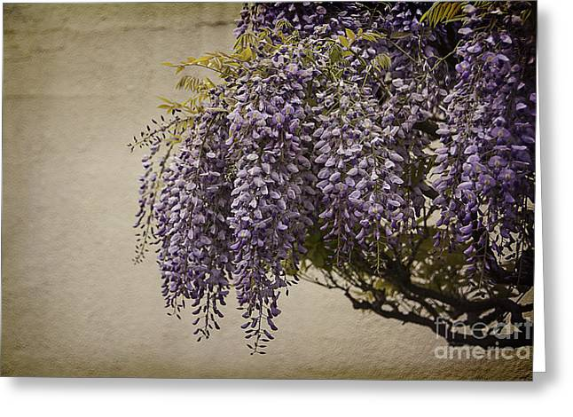 Process Greeting Cards - Focus on Wisteria Greeting Card by Terry Rowe