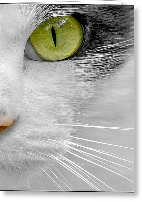 Silver Eye Shadow Greeting Cards - Focused on You Greeting Card by Adrian Campfield