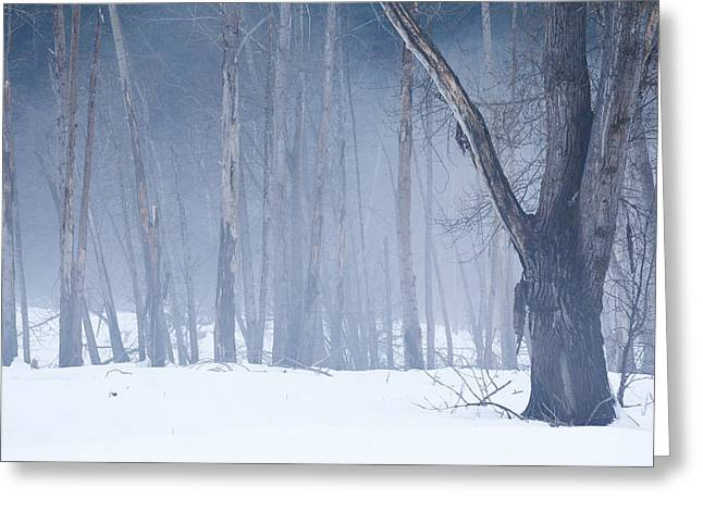 Lily Greeting Cards - Fog and Trees Greeting Card by Lily