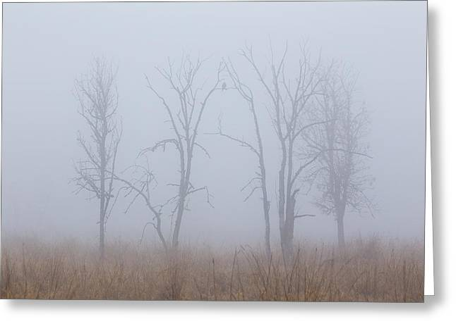 Foggy Day Greeting Cards - Fog Greeting Card by Angie Vogel