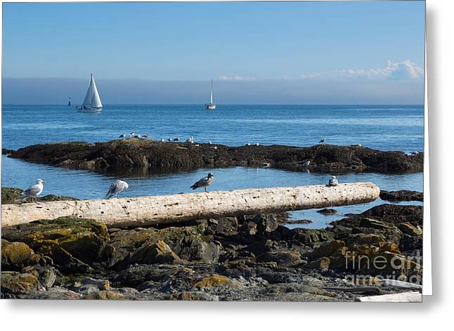 Inversion Greeting Cards - Fog bank in the Strait of Juan de Fuca II Greeting Card by Louise Heusinkveld